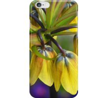 Crown imperial flower (yellow, blue, orange) iPhone Case/Skin