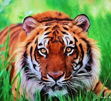 Tiger by Scott A. Ray