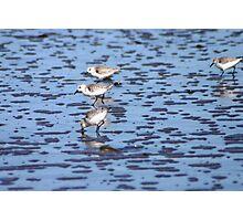 Ocean birds Photographic Print