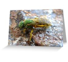 Metallic Green Bee ~ Male Greeting Card