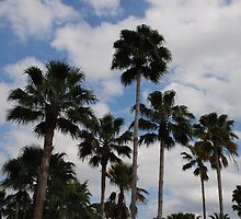 Palm Trees by nFocus
