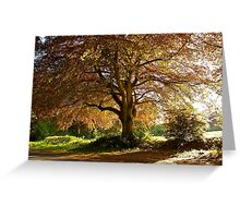 Copper Beech in Rural Hampshire  Greeting Card
