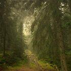 Mystical Forest by Béla Török