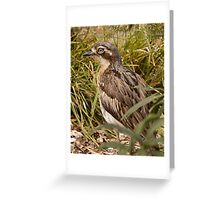 Bush Thick Knee Greeting Card