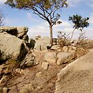 Tree at Big Rock by Leanne Nelson