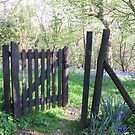 Bluebell gates by nickyv33