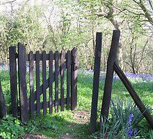 Bluebell gates by nickyv33