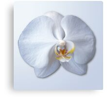 Orchid Blossom Canvas Print