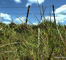 grassy knoll by arthurodb