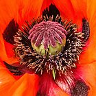Poppy Heart 2 by Chris Thaxter