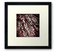 Flower blossoms Framed Print
