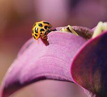 Cute little ladybug on purple flower by Rick Fin