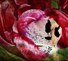 Requiem for a Tulip (Collaboration) by Johanne Brunet