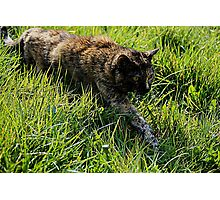 Great Strides Photographic Print