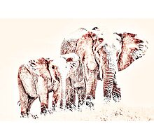 Animals Of The Rainbow Elephants Photographic Print