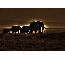 Elephant Herd On The Masai Mara Photographic Print