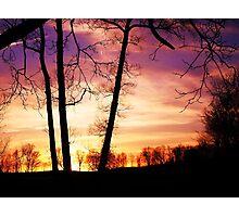 tree madness Photographic Print