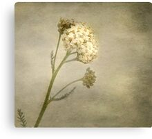 wlld herb Canvas Print