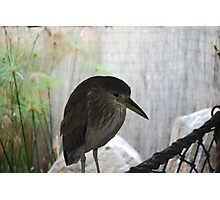Da Bird Photographic Print