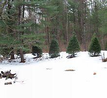 Snow in the Berkshires by EMElman