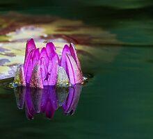Birth of A Flower by Tomas Abreu