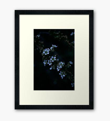 Manuka Framed Print