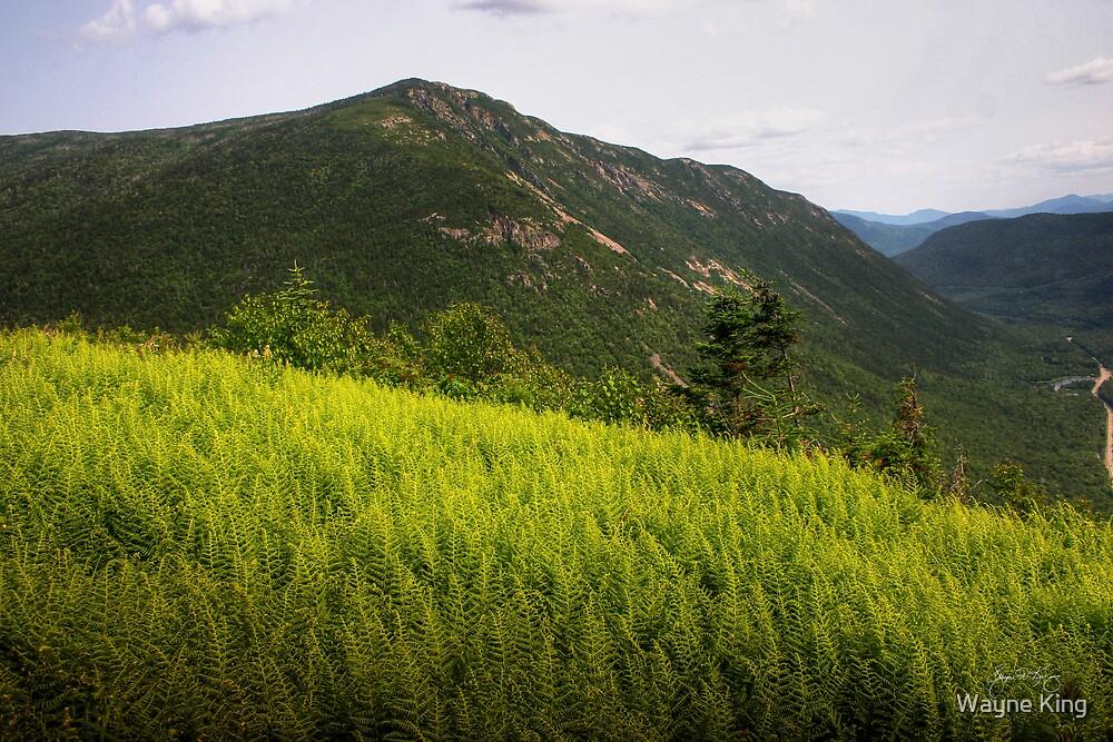 Ferns Atop Mt Willard by Wayne King