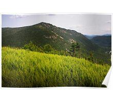 Ferns Atop Mt Willard Poster