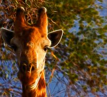 Kruger Giraffe by Nicolas Raymond