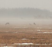 Five Deer In The Mist by Stephen Thomas