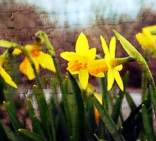 Narcissus Flowers by Ryan Houston