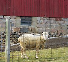 No. 4 Sheep on the Farm by MichiganGirl