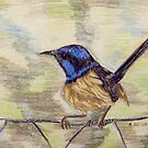Wren on a Wire by Alexandra Felgate