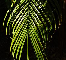 Soft Palm Fronds by Peri