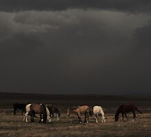 Riders On The Storm by Gene Praag