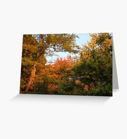 trees again Greeting Card