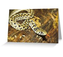 Checkered Garter Snake Greeting Card