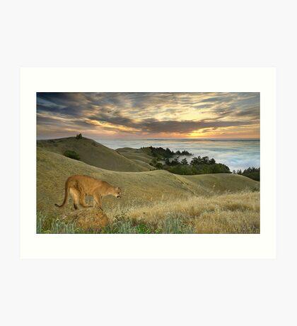 1177-Misty Cougar Sunset Art Print
