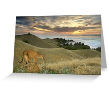 1177-Misty Cougar Sunset Greeting Card