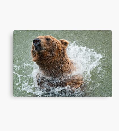 Bathing Bear Canvas Print