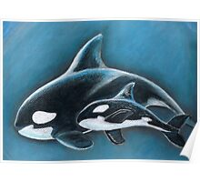 Wild Orcas Poster