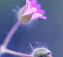 Fuzzy Flowers by Tracy Jones