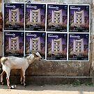 street goat by jihyelee