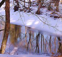Spring reflection by loiteke