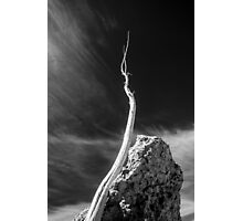 Branch, brined and bleached. Mono Lake, Ca  Photographic Print