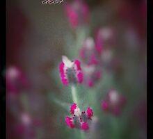 Magic Lavendar Dust Auras © Vicki Ferrari Photography by Vicki Ferrari