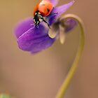 Ladybug by JBlaminsky