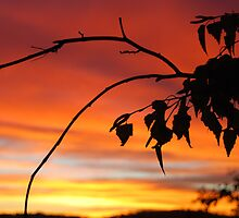 Sunrise by Lily Kentwell
