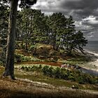 The Pines shoreham beach by Daryl Gordon