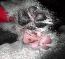 Odd Socks... by xTRIGx